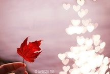 Canada / by Lucille Drew