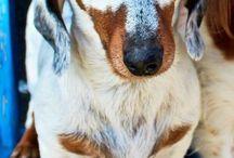 cachorros linguiças fotos