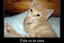 cats / gatos lindos
