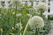02.White Gardens
