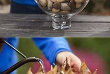 Bulbs in water / Growing flower bulbs in water