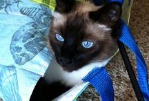 Here kitty, kitty / by Debbie Rochon