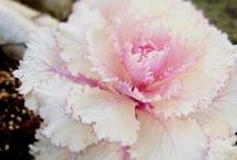 Flowers / by Lindsay Mullen