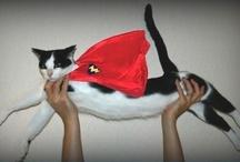 KatZ / I love all cats...Great and Small... / by Annie DiMattia