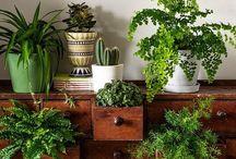 Grønne planter inde