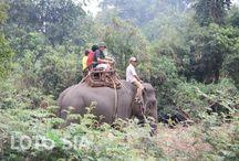 Vietnam Elephant Trek