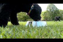 Animals & The Environment