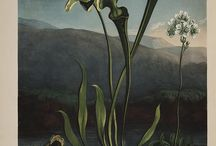 Botanical / Plants