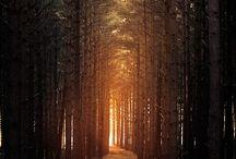 Natur/rejse