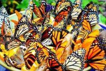 Gardens ... butterflies