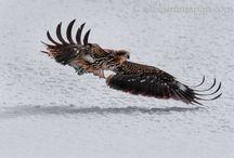 Tour Japan with Camera in hand! / Nature & wildlife of subarctic Hokkaido, Japan.