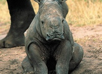 My Love for Rhino's ❤️