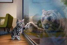Gaticos