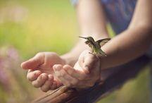Nature & Animals / by Bobbie Smith