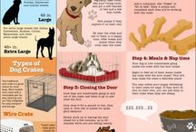 Puppy Tips / by Gidget Jarrell Woodward