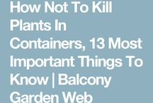 Plants how not to kill plants in containers