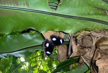 crickets, beetles