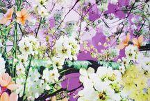 My Joli Spring