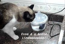 Gatos - Bebedouros e Comedouros