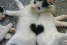 Animaux / Panda,tigre,renard,chat,chien on aimes tous car ils sont tous trop craquants