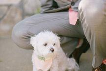 Wedding Pets // / Pets at weddings!