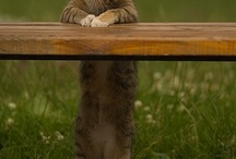 """just for fun,   a smart sense of humor & delights / fun photos, puns, silly situations, """"aww"""" moments / by Donna Paustian"""