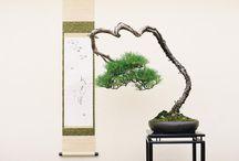 Bonsai. Sztuka miniaturyzacji drzew / Jeśli mieszkasz w bloku i nie masz możliwości założenia ogrodu, możesz stworzyć kompozycję bonsai, która wprowadzi do wnętrza namiastkę naturalnego krajobrazu. Autor: Justyna Majkowska  Więcej na http://www.dobrzemieszkaj.pl/otoczenie_domu/93/bonsai_sztuka_miniaturyzacji_drzew,100670.html