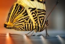 Mariposas, libélulas y otras hierbas