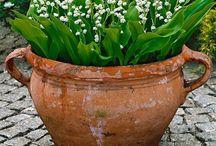 Flower (in) pots