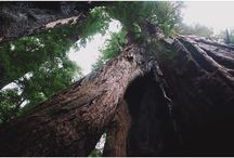 Big Basin Redwoods State Park / by CA State Parks