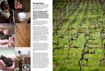 Book / A beautiful illustrated book about 40 Lucchesia wine makers portraying their love and passion for the land.   Tradition and innovation, untold stories and quality wine making.