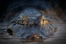 Wildlife / Wildlife, Animal http://www.mbrynolfphoto.com