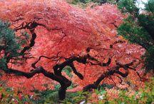 Trees / #trees, #tree, #nature