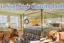 Dog's chewing problem