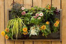 Garden / by Deborah Keating Rennels