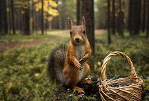 ANIMAL • Squirrel
