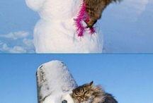 furry love / by ashlee b