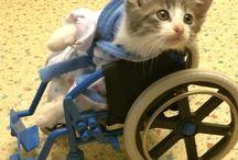 kissa istuu rattaissa