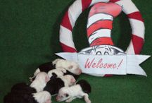 Dr. Seuss nest Cap-a-pie Cartouche / #oes #bobtail #old english sheepdog# #seuss#