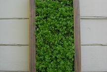 Vertical Garden / by Urban Garden Workshop