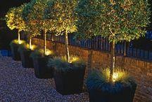 Ruan Garden