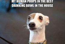 Dog & other animal memes