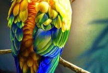 Papegøyer / Parrots