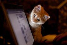 Cute cat miaowwww