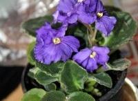 Bitki yetiştirmek için yapılması gerekenler-Growing Plants