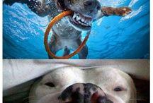 Zabawne Psy