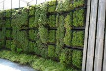 Vertikal garden