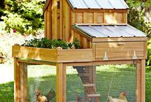 chicken house