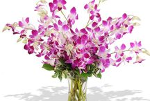 floweraura bhopal / Send flowers to Bhopal, even if you are faraway.