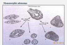 Slinné žlázy/Salivary glands
